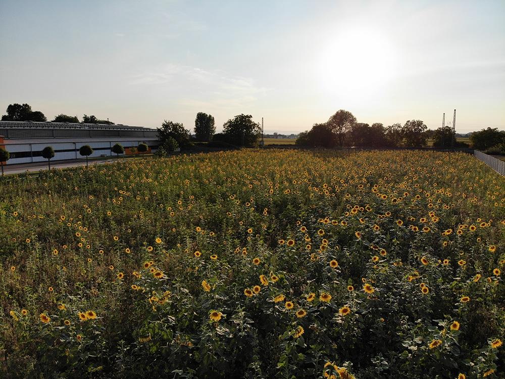 Eine Blumenwiese für Bienen, Schmetterlinge, Insekten und ...